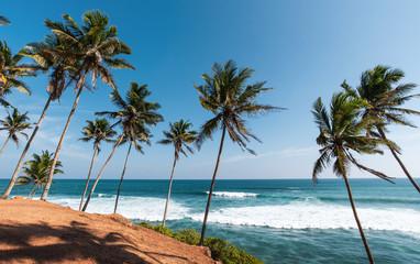 Coconut tree hill in Mirissa Sri Lanka