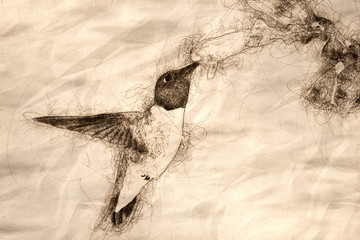 Wall Mural - Sketch of a Black-Chinned Hummingbird Searching for Nectar Among the Blue Flowers