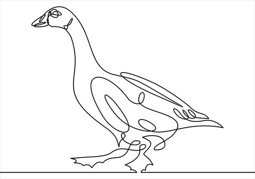 Continuous line drawing of goose.  Vector illustration.
