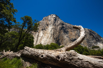 The iconic El Capitan from below during the sunny summer day. Yosemite Valley is located in California in the USA