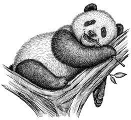 black and white engrave isolated panda illustration