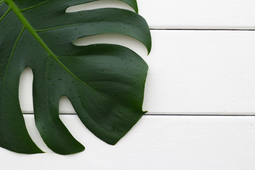 Leaf from an Swiss Cheese Plant (Monstera Deliciosa) on a rough wihite wooden table. Background image with copy space. Other names are Fruit salad plant, or Fruit salad tree.
