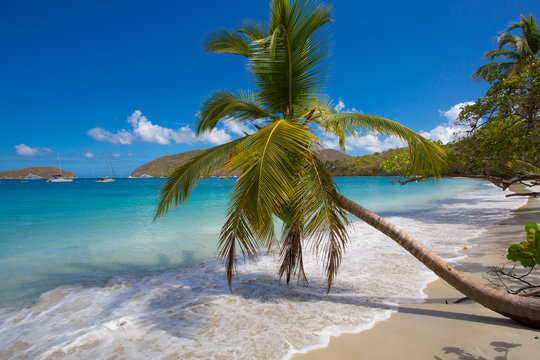 Palm trees on Maho Bay Beach on the Caribbean Island of St John in the US Virgin Islands