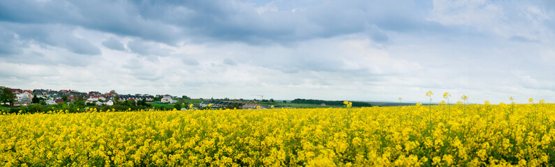 Wall Mural - rapeseedfields in rural area on stormy sky