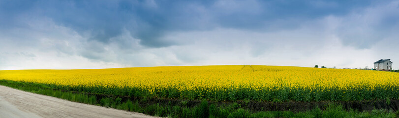 Wall Mural - panoramic view of Rape Field before the thunderstorm sky
