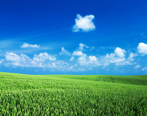 Wall Mural - green grass field with bule sky and white clouds. Meadow and white clouds