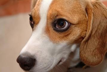 puppy dog closeup