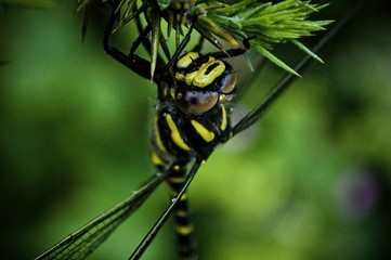 Scotland Wildlife photography macro dragonfly