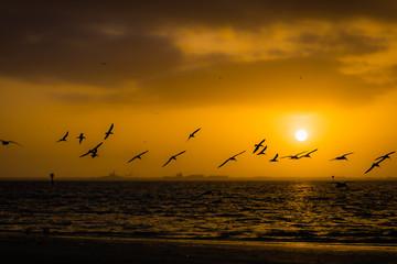 Foto op Aluminium Zee zonsondergang Seagull silhouette sunrise on Tampa Bay morning
