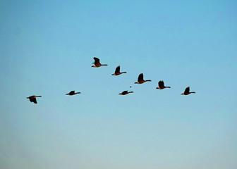 Recess Fitting Bird Geese