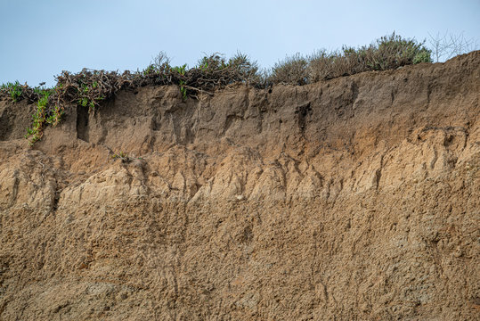 USA, California, San Mateo County, Half Moon Bay. An exposed cross section of Wastonville soil series  in the mollisol soil order. The massive light brown blocks in the C horizon layer are the result