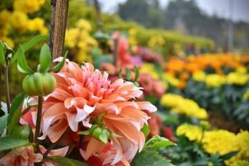 Flower wallpaper HD gardening
