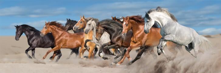 Wall Mural - Horse herd run gallop in desert sandy dust against blue sky