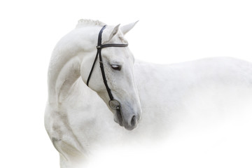Foto op Textielframe Paarden Grey horse with long mane close up portrait on white background. High key image