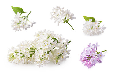 Türaufkleber Flieder Set of blooming lilac. Branches of lilac flowers isolated on white background.