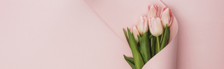 top view of tulip bouquet wrapped in paper swirl on pink background, panoramic shot Wall mural