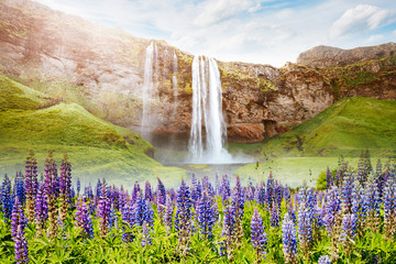 Perfect view of famous powerful Seljalandfoss waterfall in sunlight.