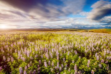 壁紙(ウォールミューラル) - Typical icelandic panorama. Location Iceland, Europe.