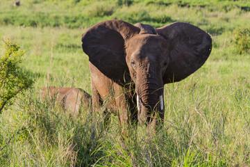 Elefantenfamilie im Tarangire-Nationalpark, Tansania