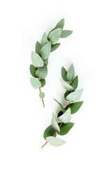 Wall Mural - Pattern made of eucalyptus branches and leaves on white background. Flat lay, top view. floral concept