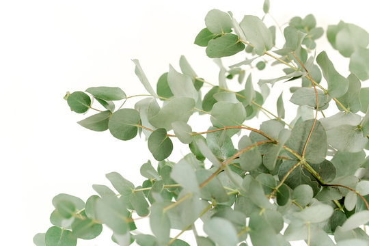 A bunch of twigs green eucalyptus in a glass jar on the table.