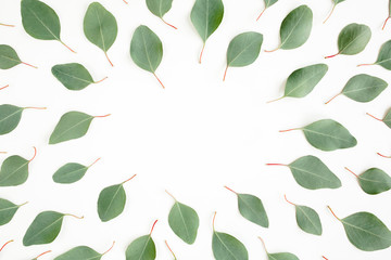 Wall Mural - Frame made green leaves eucalyptus populus isolated on white background. Flat lay, top view