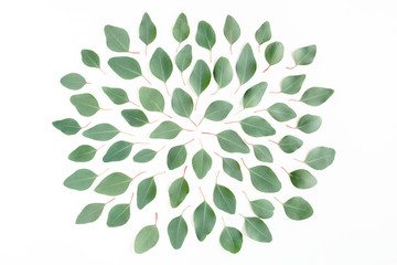 Wall Mural - Abstract pattern/texture with green leaves eucalyptus populus isolated on white background. Flat lay, top view