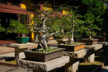 Keuken foto achterwand Bonsai bonsai trees in chinese garden , bonsai tree nursery