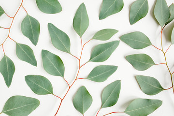 Wall Mural - Pattern with green leaves eucalyptus populus isolated on white background. Flat lay, top view