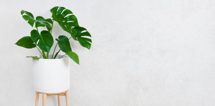 Flower pot with plant on grunge wall background with space