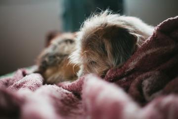 cachorro descansando em uma cama confortável