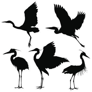 Heron silhouette set. Vector illustration