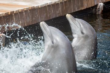 Autocollant pour porte Dauphin delfin nadando