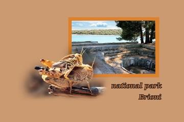 postcard design for N.P. Brioni, Croatia