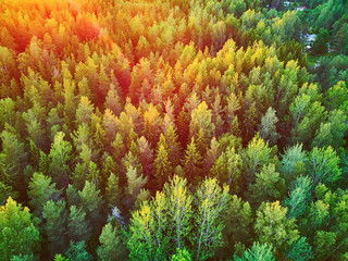 Foto auf AluDibond Baume Scenic top down view of mixed forest in Finnish countryside, at sunset