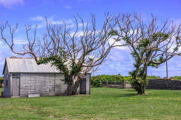 Stanley, Tasmania, Australia - December 15, 2009: Hightfield Historic Site. Couple of trees in front of gray wooden barn on green lawn under blue sky.