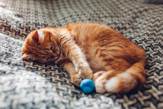 Ginger cat playing with ball on couch in living room at home. Pet having fun