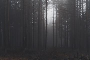 Türaufkleber Grau Verkehrs mystischer Wald im Nebel