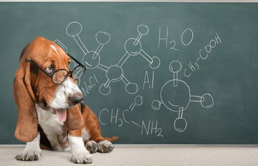 academic math dog in glasses on a blackboard background