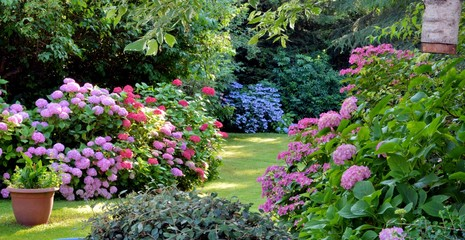 Poster Tuin Beautiful garden with hydrangeas in Brittany