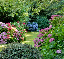 Foto auf Leinwand Hortensie Beautiful garden with hydrangeas in Brittany