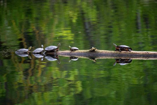 Steigerwald Lake National Wildlife Refuge, Camas Washington