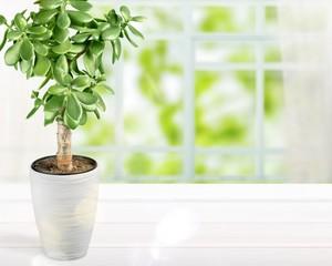 Acrylic Prints Plant Plant.