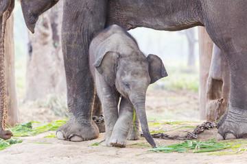 Türaufkleber Elefant Small elephant