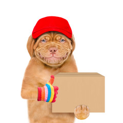 Smiling puppy wearing a red cap  holds big box and shows thumbs up gesture. isolated on white background