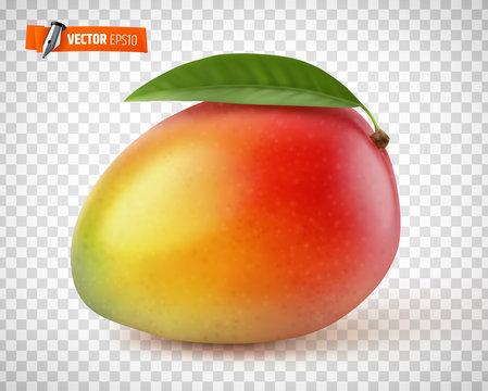 Mangue vectorielle sur fond transparent