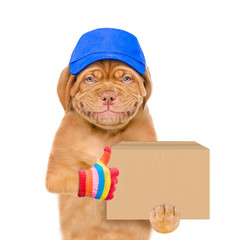 Smiling puppy wearing a blue cap  holds big box and shows thumbs up gesture. isolated on white background.