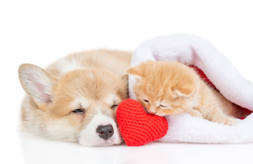 Pembroke Welsh Corgi puppy and kitten lie with a red heart. isolated on white background