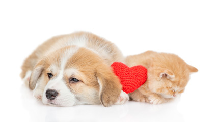 Ginger baby kitten sleeps with Pembroke welsh corgi puppy with a red heart. isolated on white background