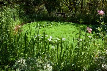 Aménagement de jardin - mare recouverte de plantes vertes